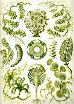 Different types of algae
