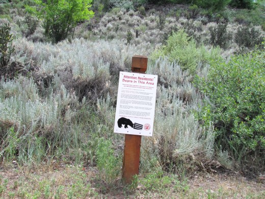 Bear warnings read often but no bears seen!