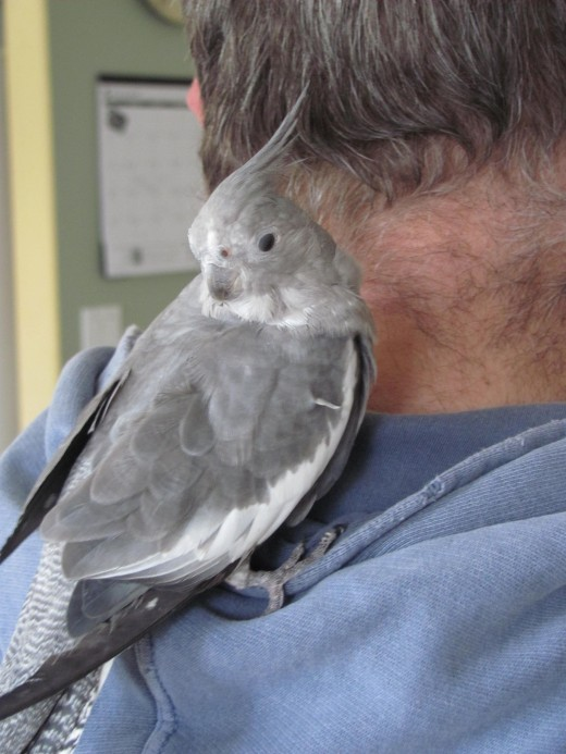 Birdz N the Hoodie