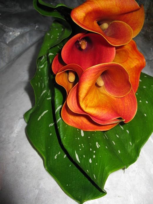 Calla lily bouquet, Calla Lilies Mini—CGWF (Flickr.com)