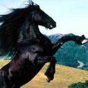 equestriannz profile image