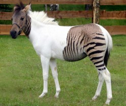 A Guide To Amazing Animal Hybrids