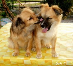 Cassie and Charlie - a tale of two Spanish puppies rescued from being drowned.