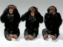 Hear no knock-knock jokes, see no knock-knock jokes, speak no knock-knock jokes. Monkeys are cute. And so wise.