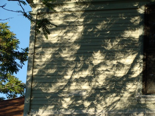 Great view of crescent suns cast by the natural pinholes between leaves in Colorado.
