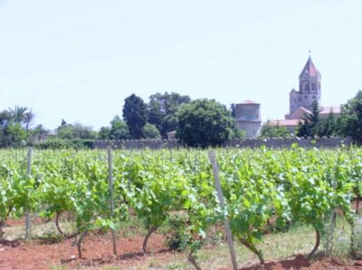 Vineyard north of monastery
