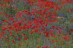 Wildflowers harbor all kinds of beneficial insects and their offspring.