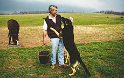 Jack, the dog greets Barnie Day on his farm. Barnie is suffering well with Parkinson's Disease.