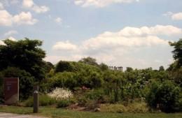 Columns from herb garden