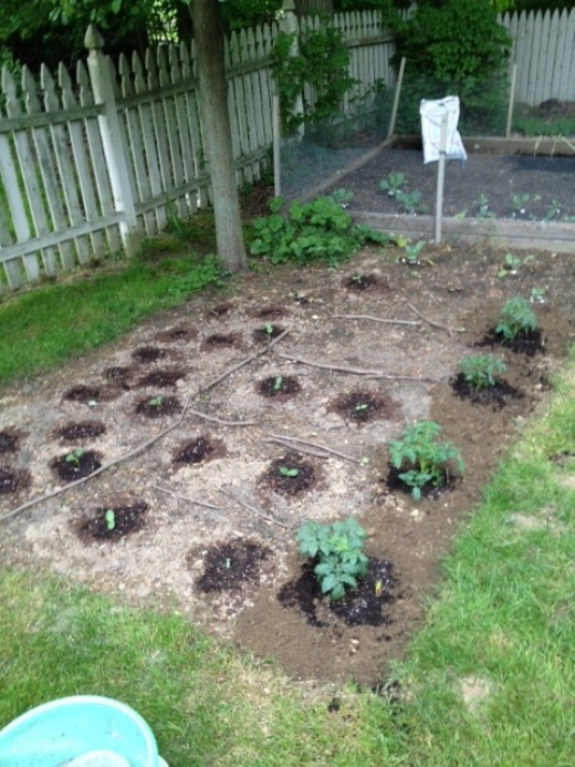 May 21, 2012: the Beginning of my victory garden!