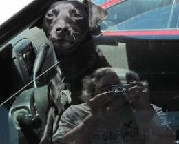 My camera and I try to shoot a photo of a dog in a car.