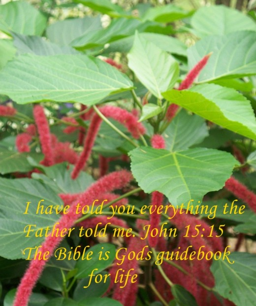 Let's use the guidebook for a deeper appreciation of God.