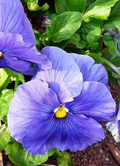 Aren't they a pretty colour?