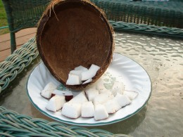The coconut experience.