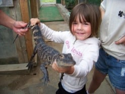 Alligator Sanctuary in Michigan