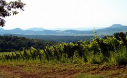 An Introduction to Hungarian Wines