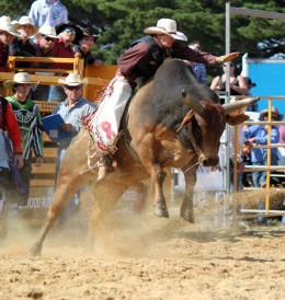 Cowboy Blood and Bull Spittle