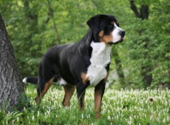 Top 10 Strong Dog Breeds