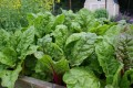 How to Plan an Early Spring Vegetable Garden