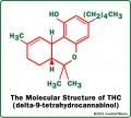 Medical Marijuana: Toxicity of Tetrahydrocannabinol (THC)