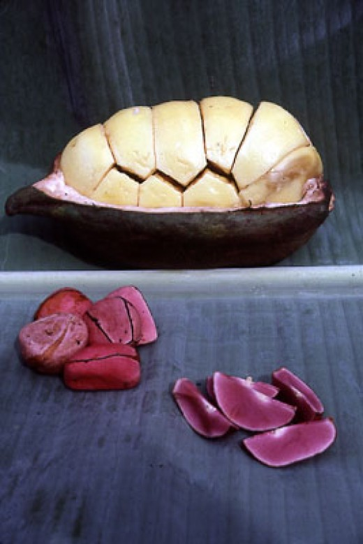 The image shows the kola nut seed pod with the tough husk cut by half longitudinally exposing the nuts and their yellow fleshy covering. In the foreground the image shows the individual nuts removed, cleaned of their covering and broken along their n
