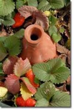 Ancient Irrigation-Clay Pots