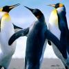 avonhagn profile image