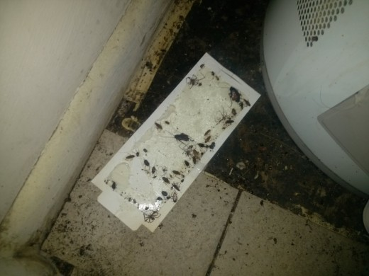 Glue board behind hotwater heater