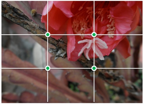 "The ""Rule of Thirds"" applied to flower photos."