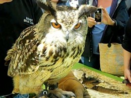 Owl brought by Airstrike Bird Control