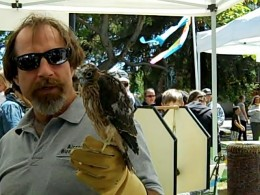 Falcon brought by Airstrike Bird Control