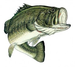 Bass Fishing: Where to find bass