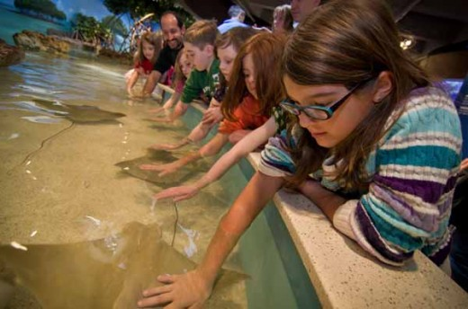 Elasmobranch Exhibit (shark and ray touch tank)