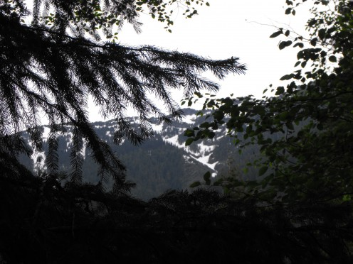 Trees surrounded by Mountain Peaks, call us to wander closer.