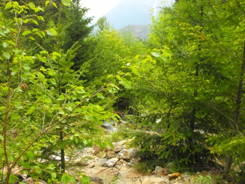 The variety of trees that share the space and love of the mountains, together, is amazing.