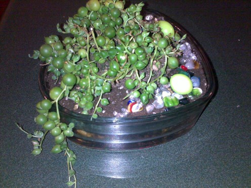 Succulent planted in glass heart shaped container