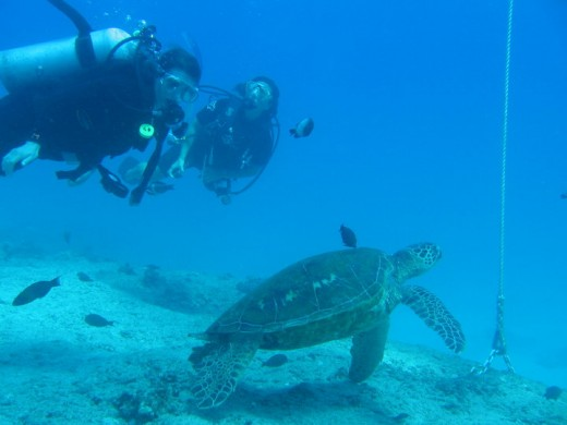 Scuba diving open your eyes to a whole new world.