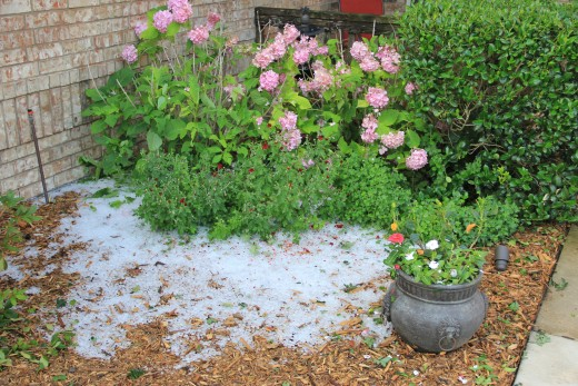 After a full night of rain, piles of hail still remained in the flower beds.