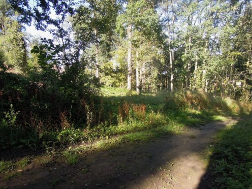 Path into Westborough Woods