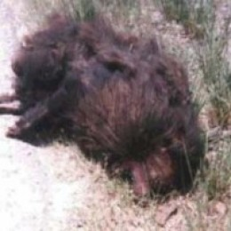 Unidentified carcass.