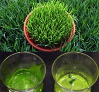 Fresh Organic Wheat Grass