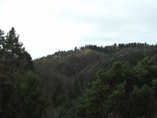 Trees and houses on the hillside in the distance.