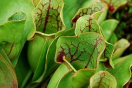 Fascinating plants.