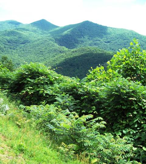 There are many different ecosystems in the region that the Parkway spans.  There are marked differences in elevation.  The lowest point is 649 feet all the way up to 6,047 feet above sea level.