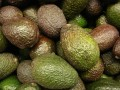 Health Benefits of Avocado – Healthy, Fatty, Caloric Fruit