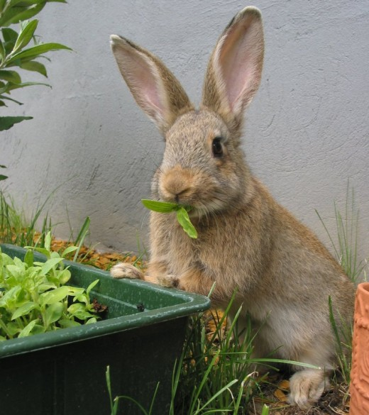 Isn't this leaf munching rabbit the cutest ever?