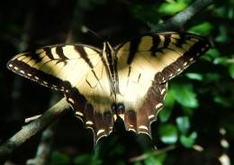 Watch the butterflies.