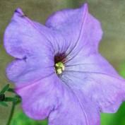sheila b. profile image