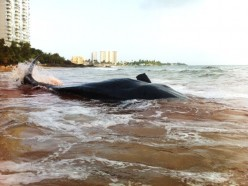 The Death Of A Whale