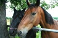 Horse Idioms and Proverbs (and Their Possible Origins)